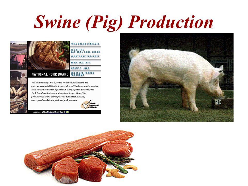 Swine (Pig) Production