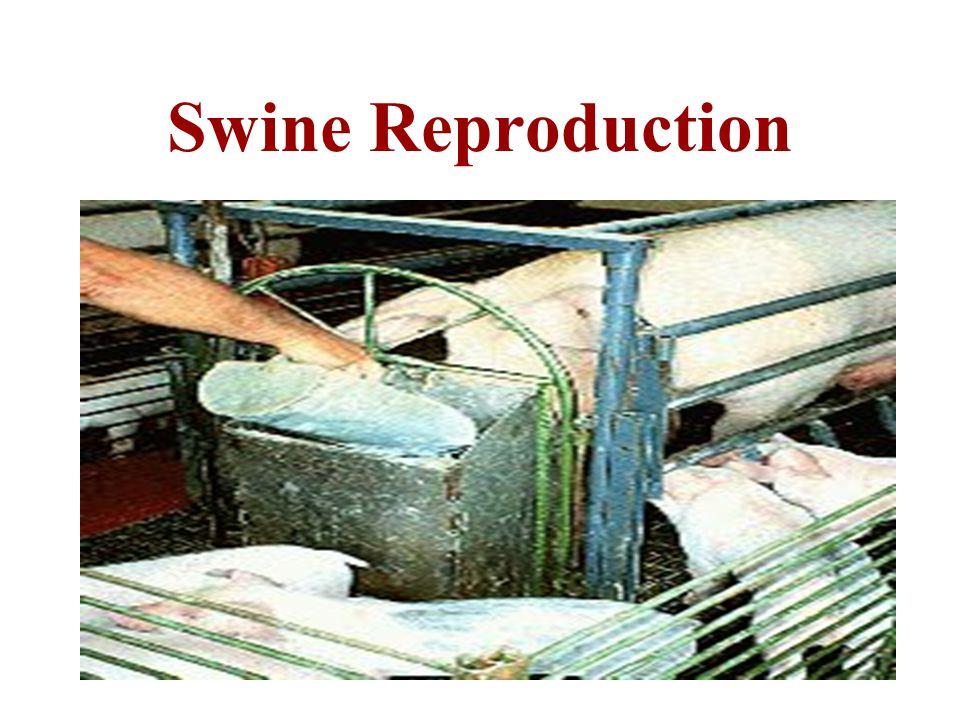 Swine Reproduction