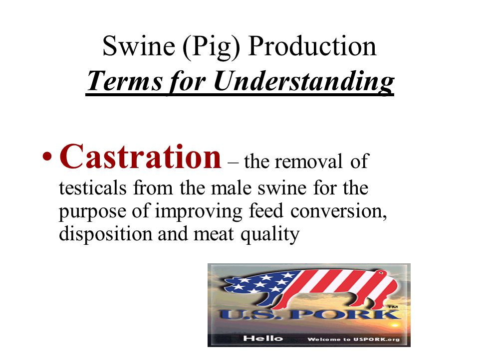 Swine (Pig) Production Terms for Understanding Castration – the removal of testicals from the male swine for the purpose of improving feed conversion,