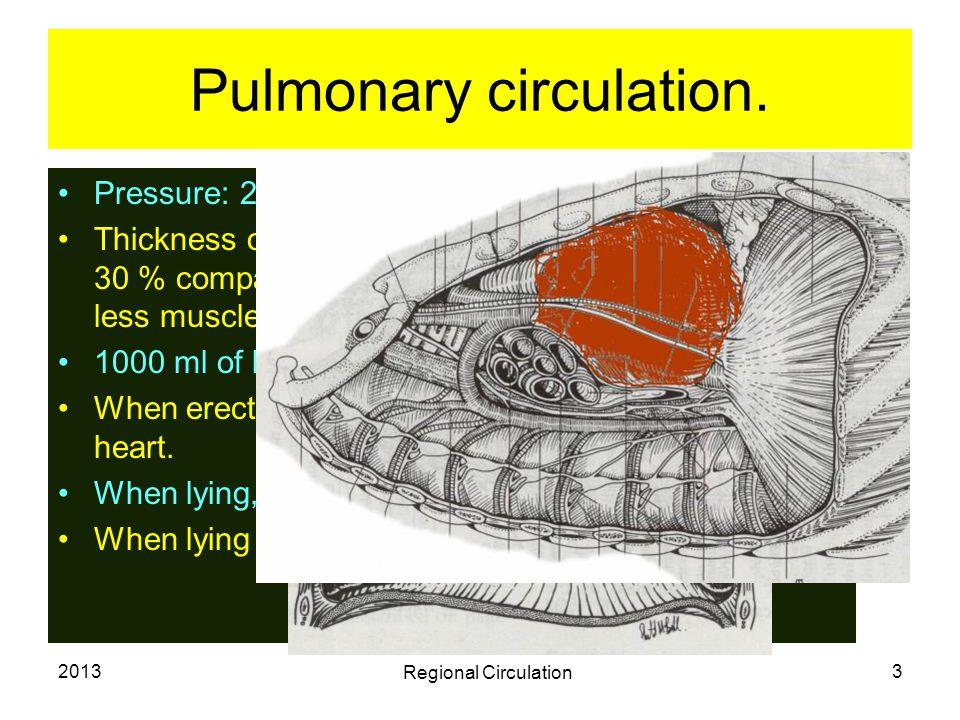 2013 Regional Circulation 4 Pulmonary circulation ctd.