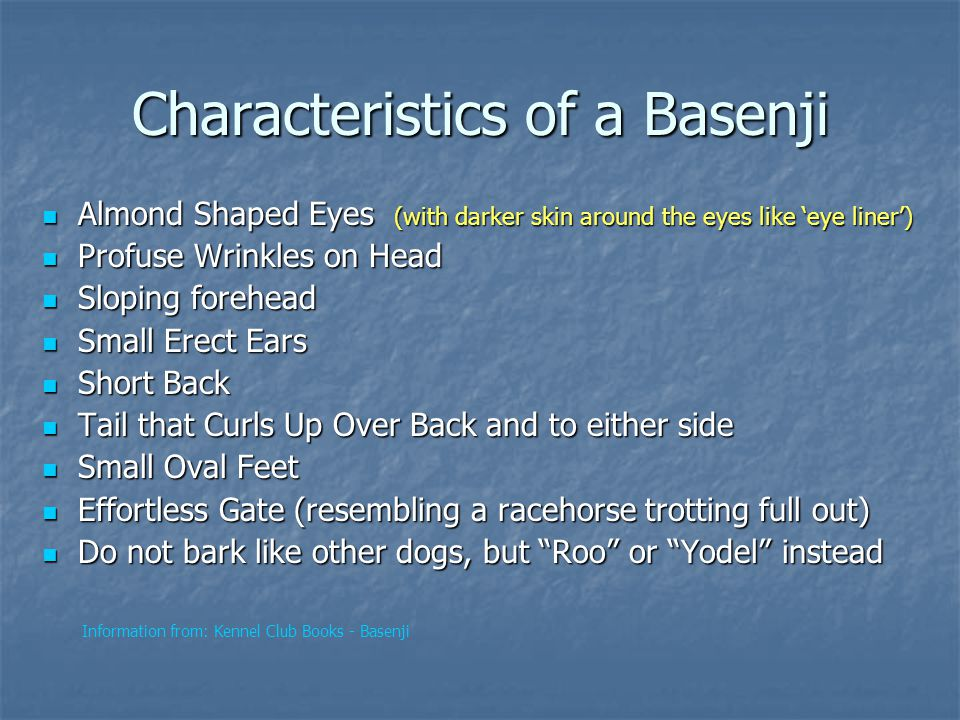 Characteristics of a Basenji Almond Shaped Eyes (with darker skin around the eyes like 'eye liner') Almond Shaped Eyes (with darker skin around the eyes like 'eye liner') Profuse Wrinkles on Head Profuse Wrinkles on Head Sloping forehead Sloping forehead Small Erect Ears Small Erect Ears Short Back Short Back Tail that Curls Up Over Back and to either side Tail that Curls Up Over Back and to either side Small Oval Feet Small Oval Feet Effortless Gate (resembling a racehorse trotting full out) Effortless Gate (resembling a racehorse trotting full out) Do not bark like other dogs, but Roo or Yodel instead Do not bark like other dogs, but Roo or Yodel instead Information from: Kennel Club Books - Basenji