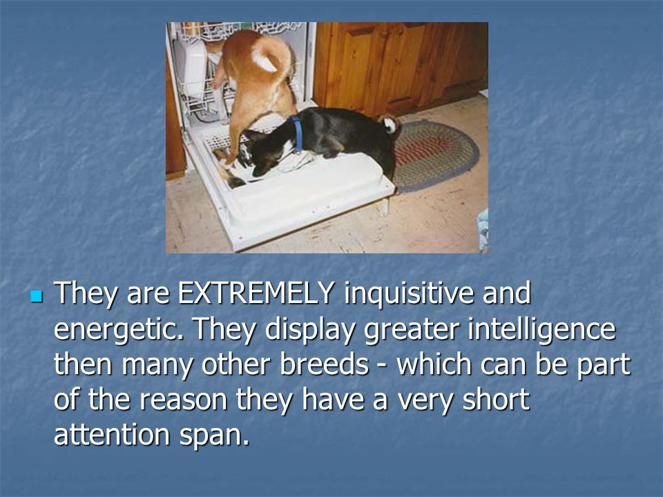 They are EXTREMELY inquisitive and energetic.