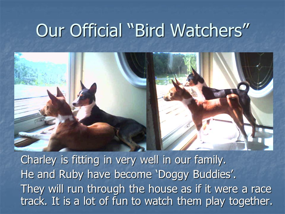 Our Official Bird Watchers Charley is fitting in very well in our family.