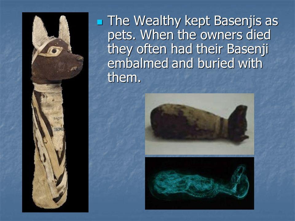 The Wealthy kept Basenjis as pets.