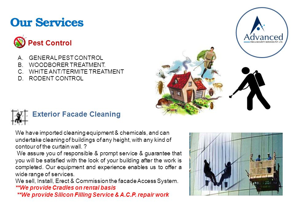 Our Services Pest Control A.GENERAL PEST CONTROL B.WOODBORER TREATMENT.