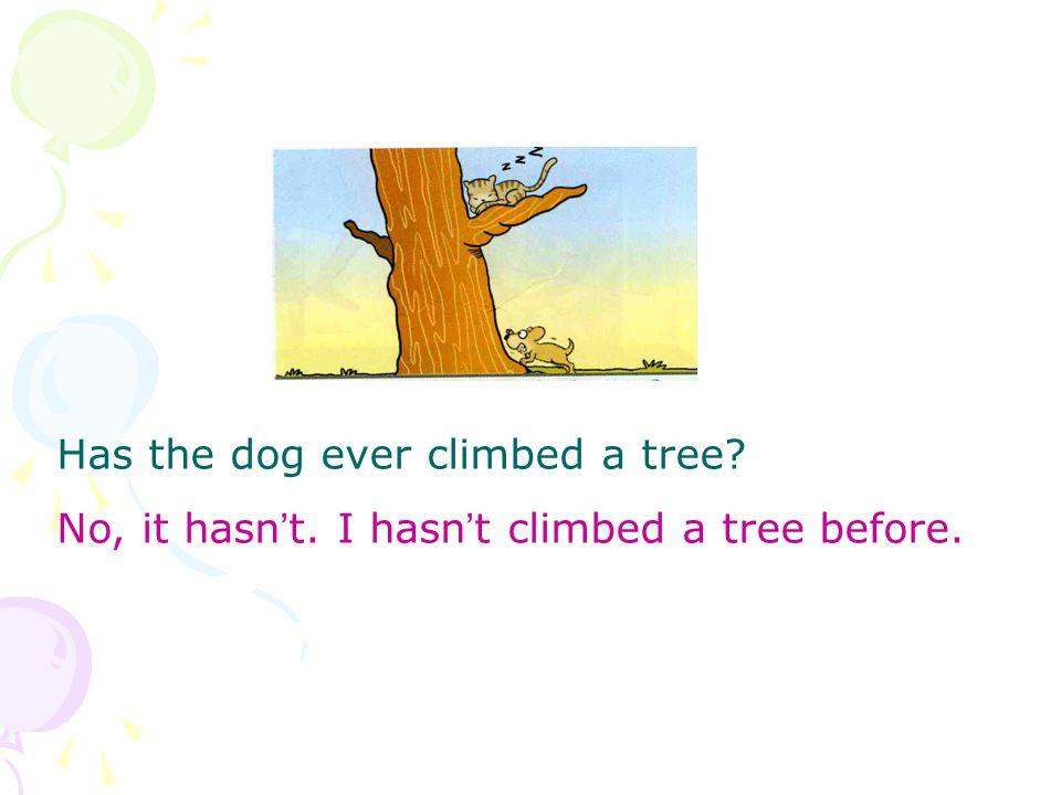 Has the dog ever climbed a tree No, it hasn ' t. I hasn ' t climbed a tree before.