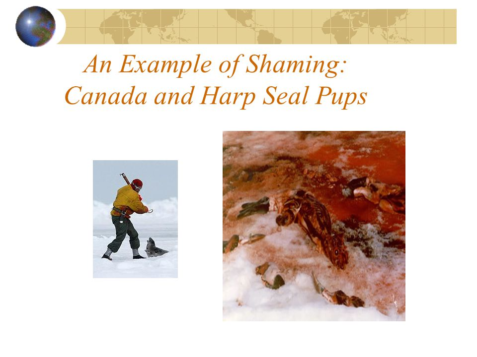 An Example of Shaming: Canada and Harp Seal Pups