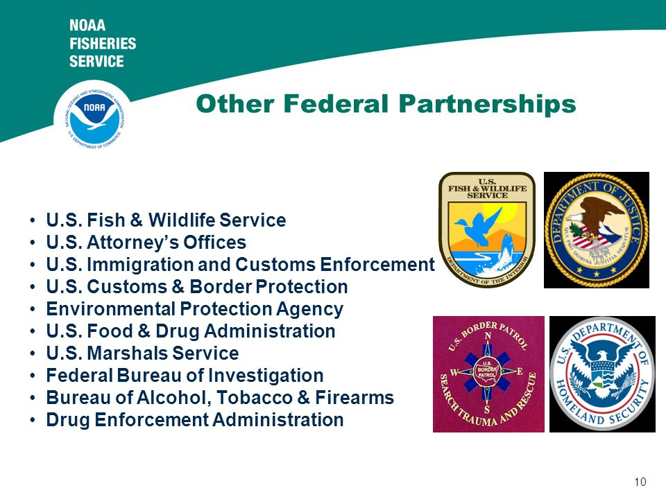 10 Other Federal Partnerships U.S. Fish & Wildlife Service U.S. Attorney's Offices U.S. Immigration and Customs Enforcement U.S. Customs & Border Prot