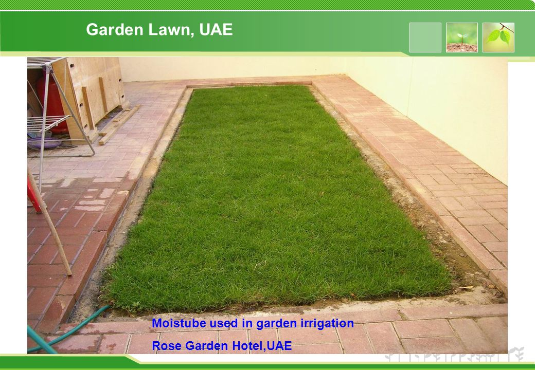 Garden Lawn, UAE Moistube used in garden irrigation Rose Garden Hotel,UAE
