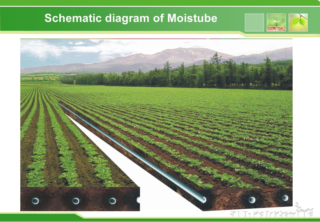 Schematic diagram of Moistube