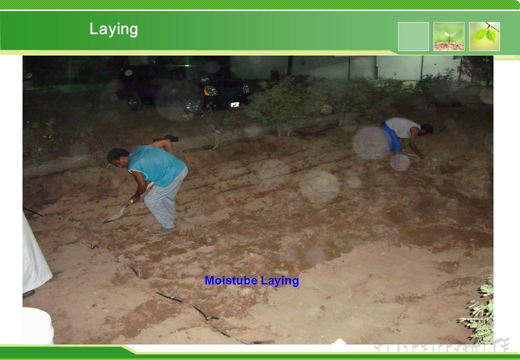 Laying Moistube Laying