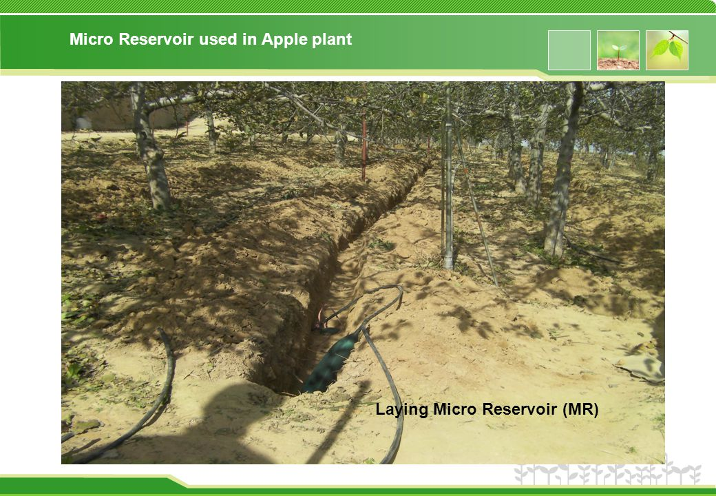 Micro Reservoir used in Apple plant Laying Micro Reservoir (MR)