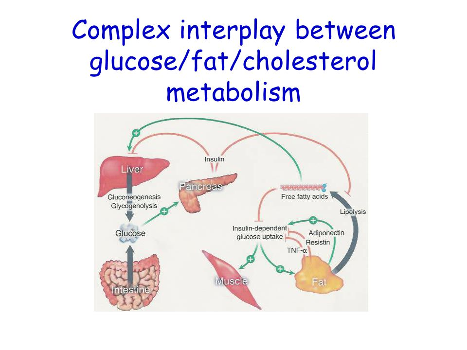 Complex interplay between glucose/fat/cholesterol metabolism