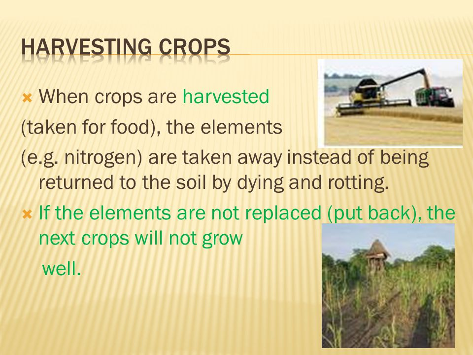  When crops are harvested (taken for food), the elements (e.g. nitrogen) are taken away instead of being returned to the soil by dying and rotting. 