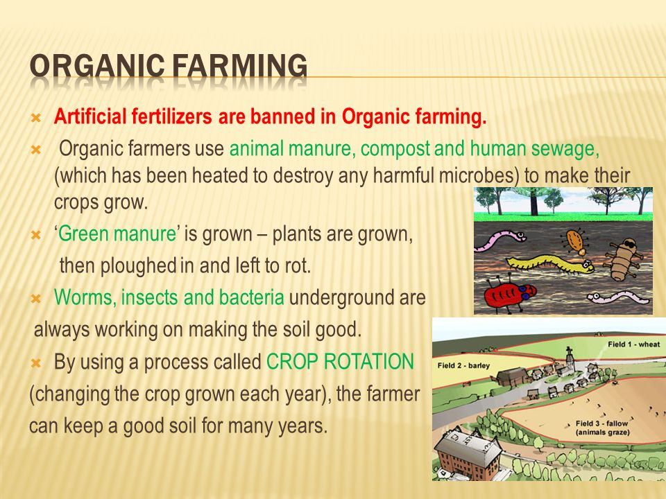  Artificial fertilizers are banned in Organic farming.  Organic farmers use animal manure, compost and human sewage, (which has been heated to destr