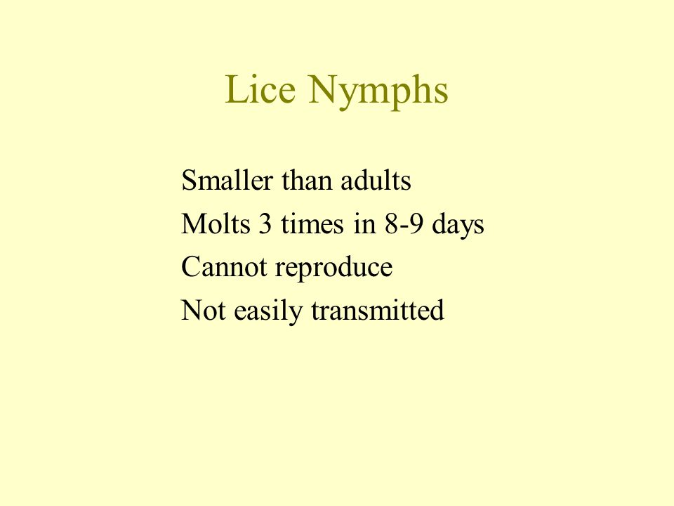 Lice Nymphs Smaller than adults Molts 3 times in 8-9 days Cannot reproduce Not easily transmitted