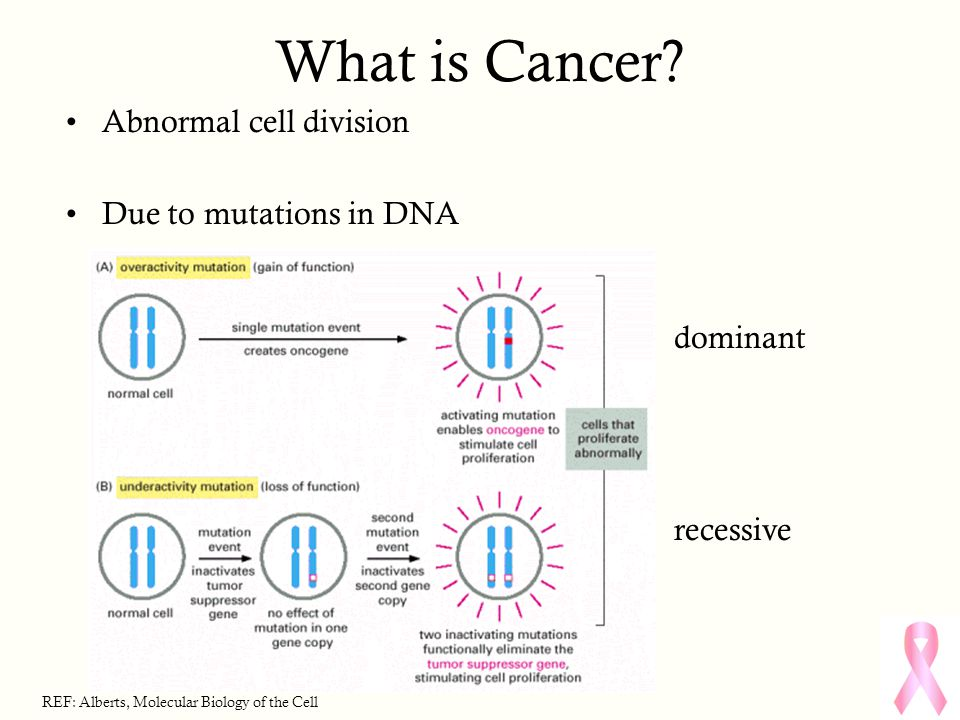 What is Cancer? Abnormal cell division Due to mutations in DNA dominant recessive REF: Alberts, Molecular Biology of the Cell