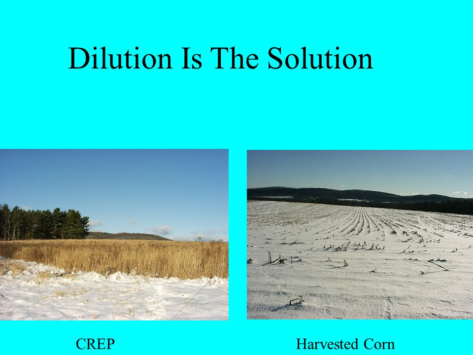 CREP Harvested Corn Dilution Is The Solution