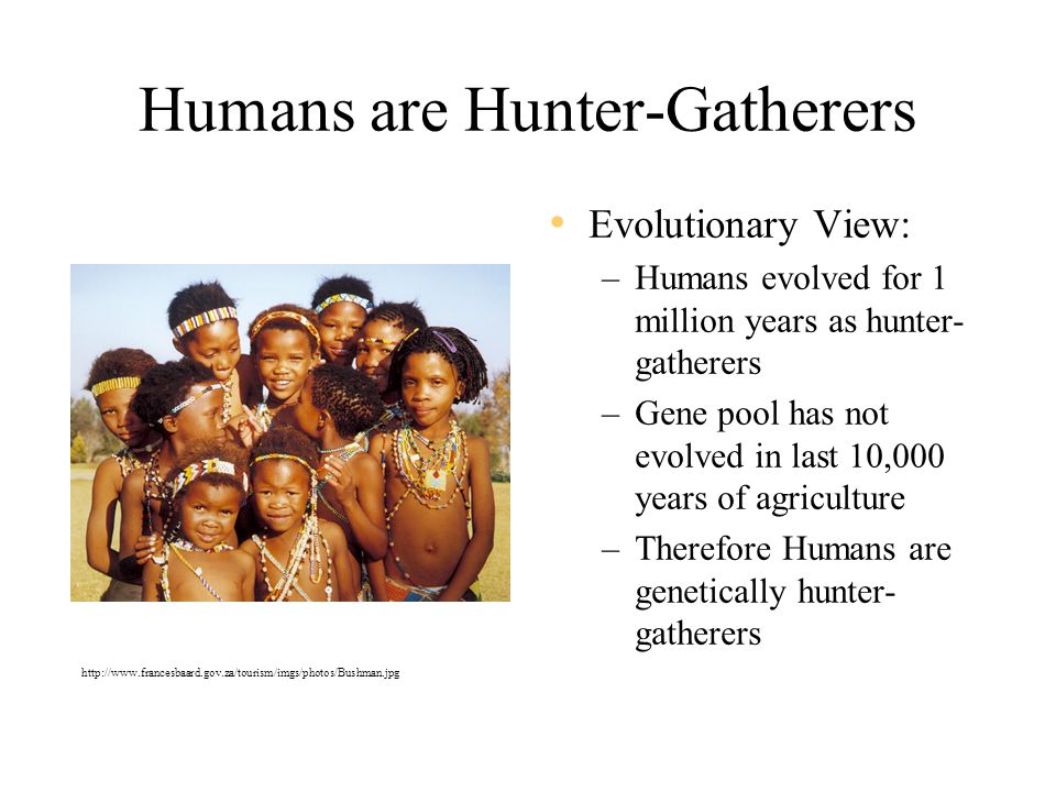 Humans are Hunter-Gatherers Evolutionary View: –Humans evolved for 1 million years as hunter- gatherers –Gene pool has not evolved in last 10,000 years of agriculture –Therefore Humans are genetically hunter- gatherers http://www.francesbaard.gov.za/tourism/imgs/photos/Bushman.jpg
