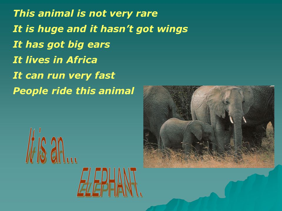 This animal isn t very big.It isn t very rare. It hasn t got long legs.