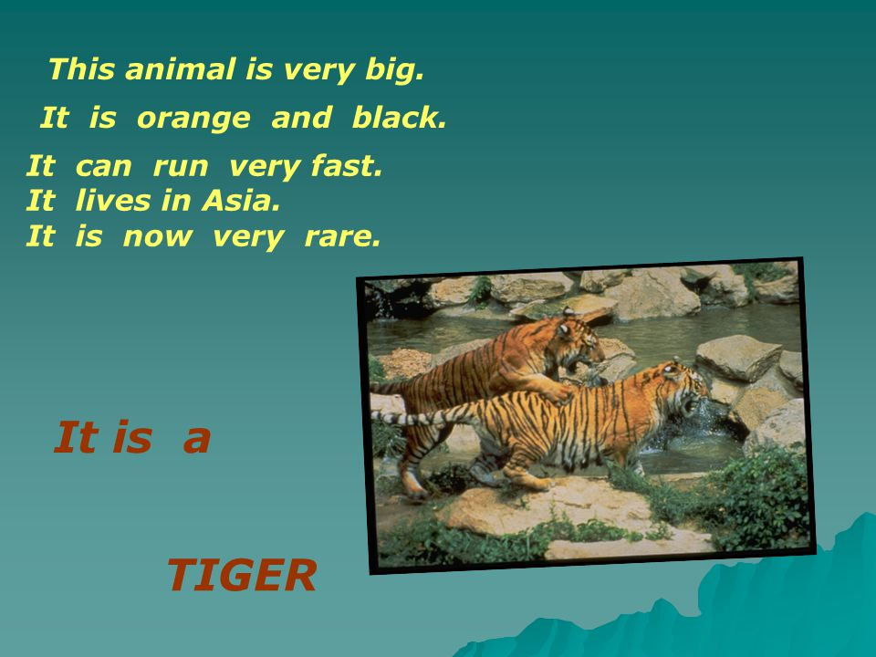 This animal is very big. It is orange and black. It can run very fast. It lives in Asia. It is now very rare. TIGER It is a