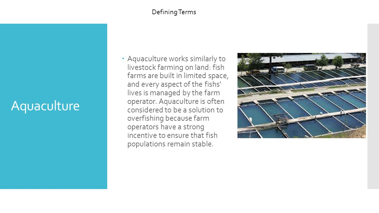  Aquaculture works similarly to livestock farming on land: fish farms are built in limited space, and every aspect of the fishs lives is managed by the farm operator.