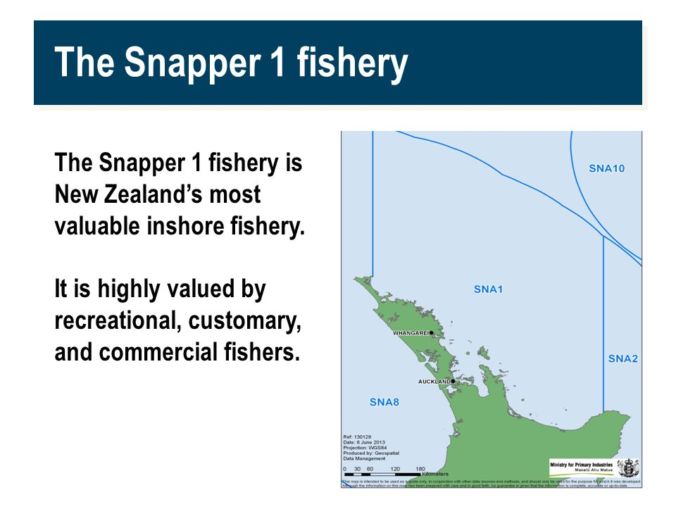 www.mpi.govt.nz 2 The Snapper 1 fishery The Snapper 1 fishery is New Zealand's most valuable inshore fishery.
