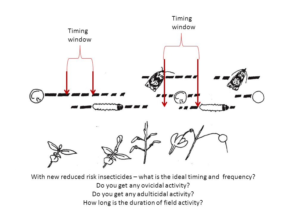 Timing window With new reduced risk insecticides – what is the ideal timing and frequency.
