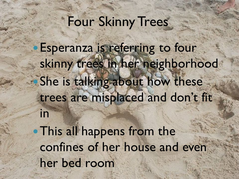 Four Skinny Trees Esperanza is referring to four skinny trees in her neighborhood She is talking about how these trees are misplaced and don't fit in