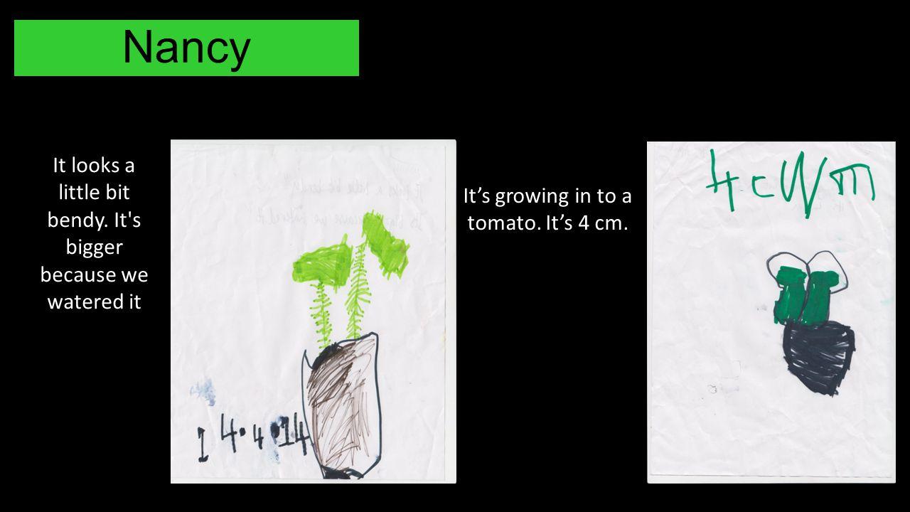 Nancy It looks a little bit bendy. It's bigger because we watered it It's growing in to a tomato. It's 4 cm.