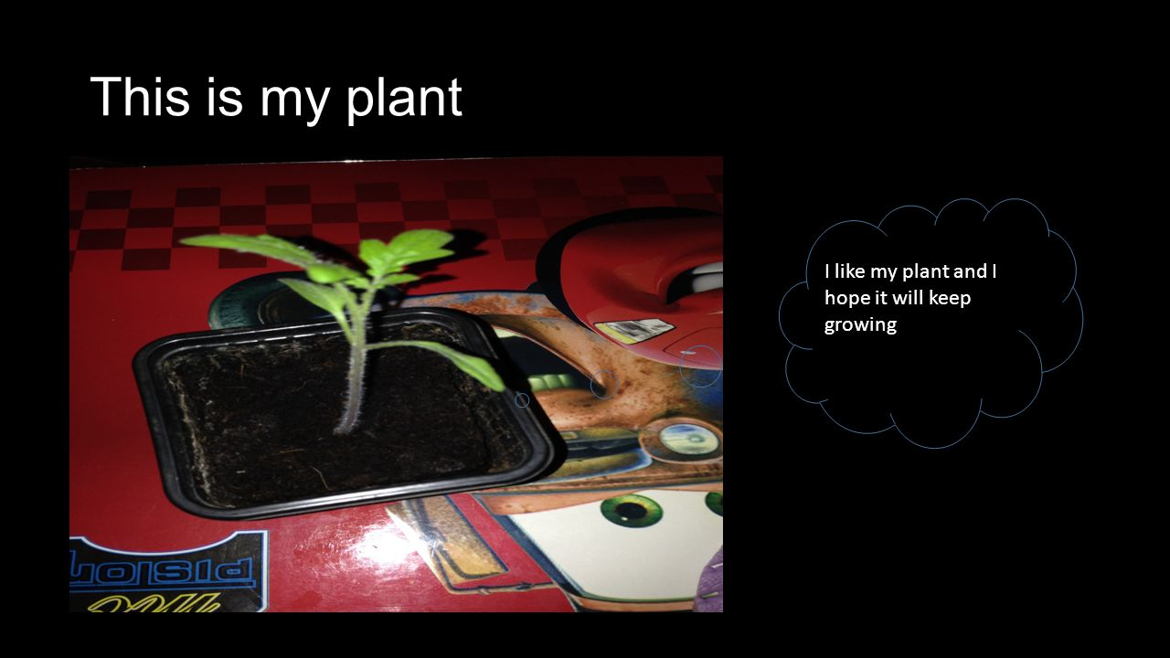 This is my plant I like my plant and I hope it will keep growing