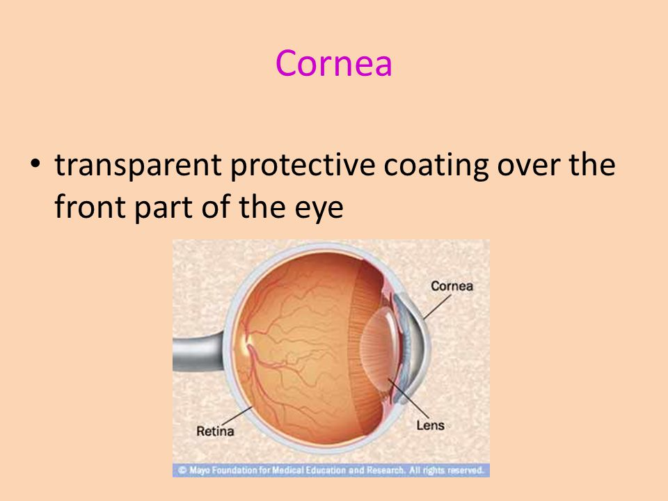Cornea transparent protective coating over the front part of the eye