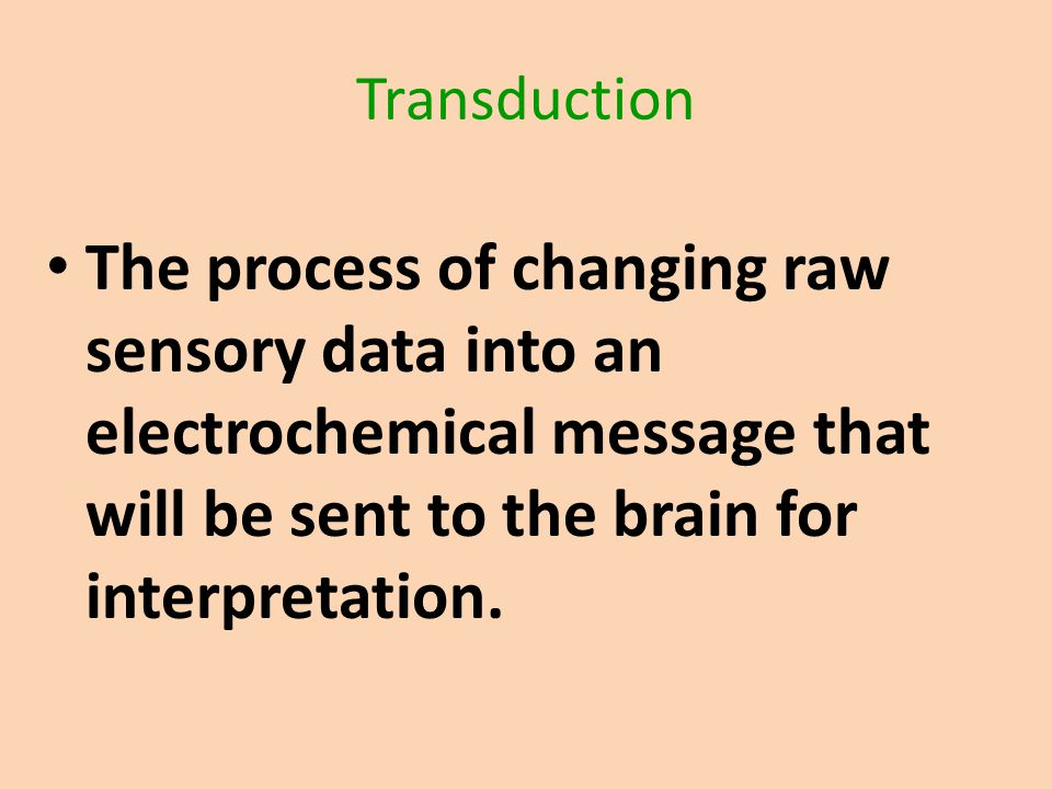 Transduction The process of changing raw sensory data into an electrochemical message that will be sent to the brain for interpretation.