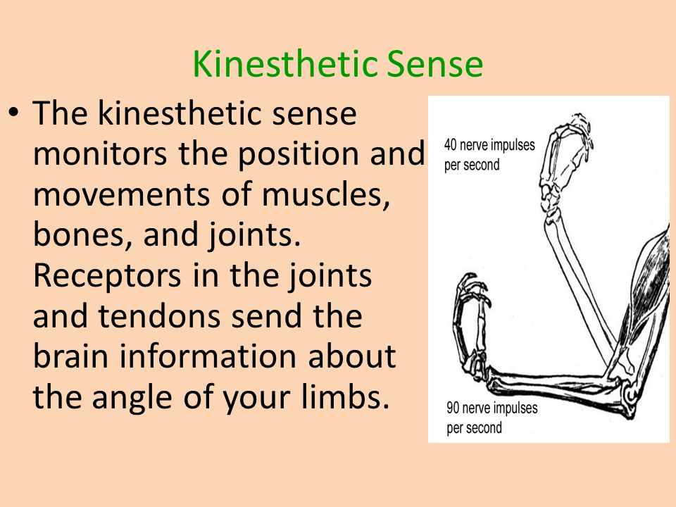 Kinesthetic Sense The kinesthetic sense monitors the position and movements of muscles, bones, and joints. Receptors in the joints and tendons send th