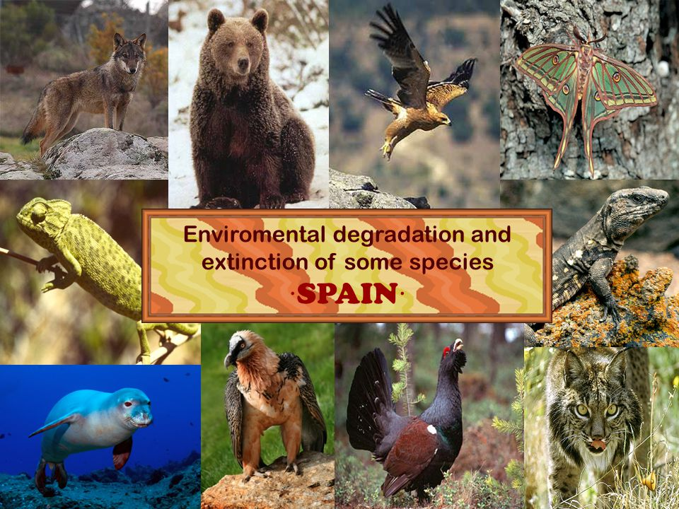 Enviromental degradation and extinction of some species ·SPAIN· 1