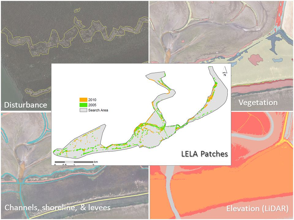 Channels, shoreline, & levees Elevation (LiDAR) Vegetation Disturbance LELA Patches