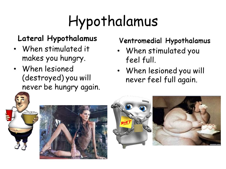 Hypothalamus Lateral Hypothalamus When stimulated it makes you hungry.