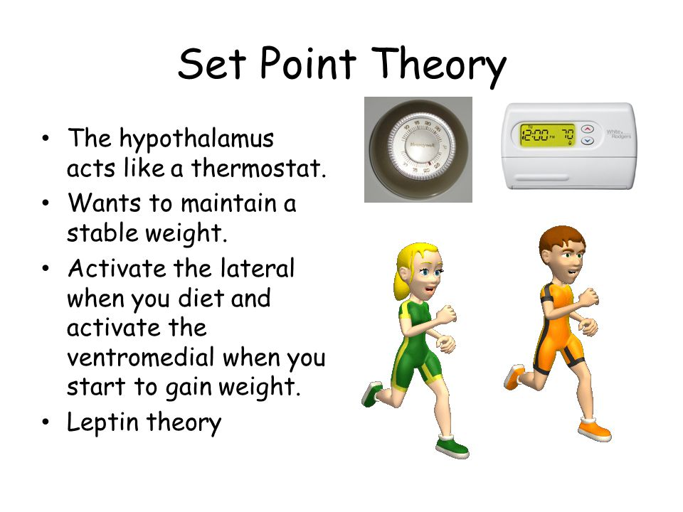 Set Point Theory The hypothalamus acts like a thermostat.