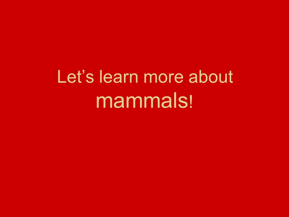 Let's learn more about mammals !