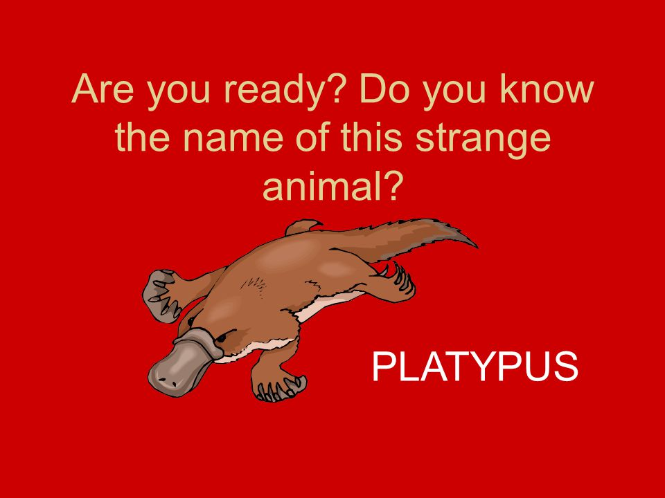 Are you ready Do you know the name of this strange animal PLATYPUS