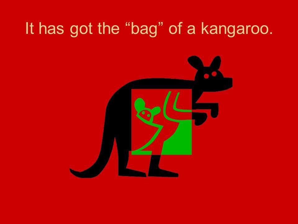 It has got the bag of a kangaroo.