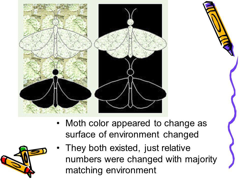 Moth color appeared to change as surface of environment changed They both existed, just relative numbers were changed with majority matching environment