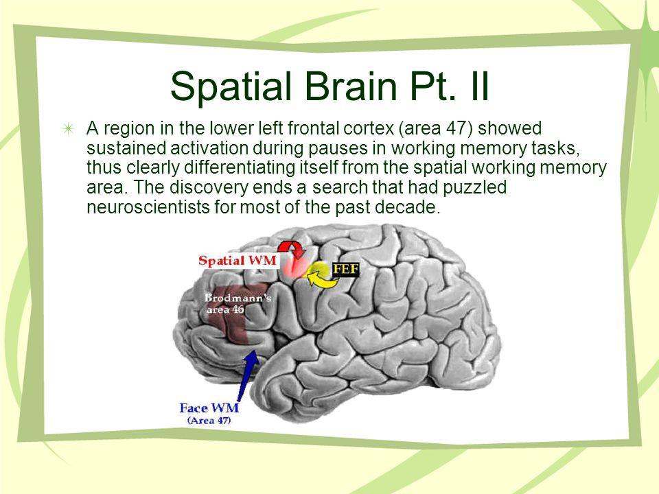 Spatial Brain Pt.