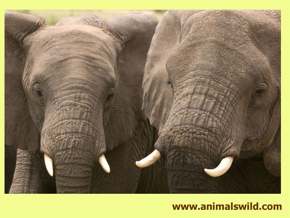 www.animalswild.com