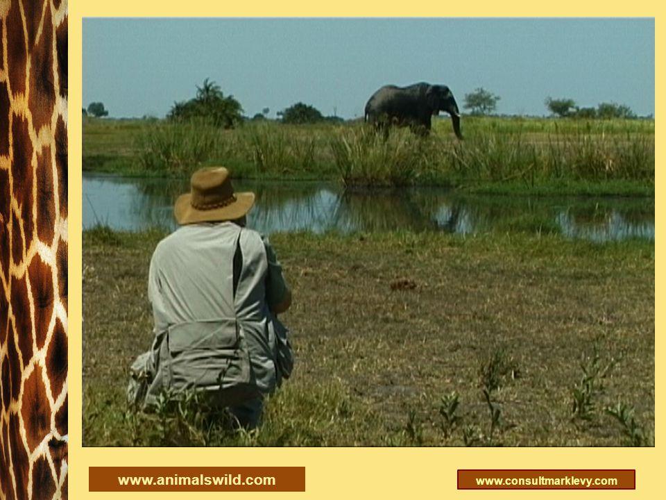 www.consultmarklevy.com www.animalswild.com