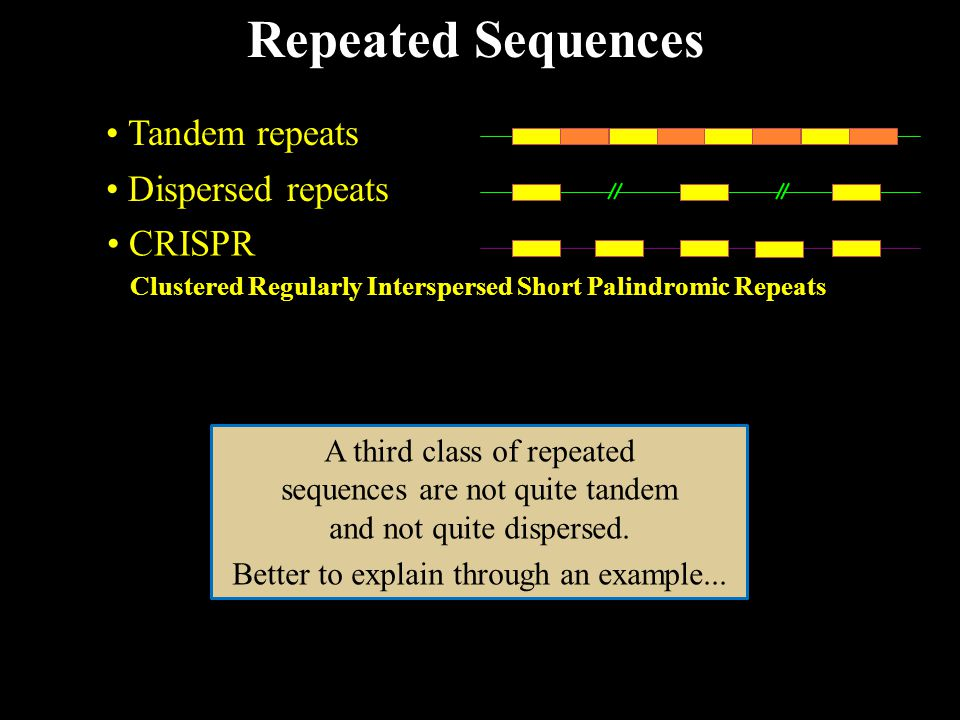 Repeated Sequences Tandem repeats Dispersed repeats CRISPR Clustered Regularly Interspersed Short Palindromic Repeats A third class of repeated sequences are not quite tandem and not quite dispersed.