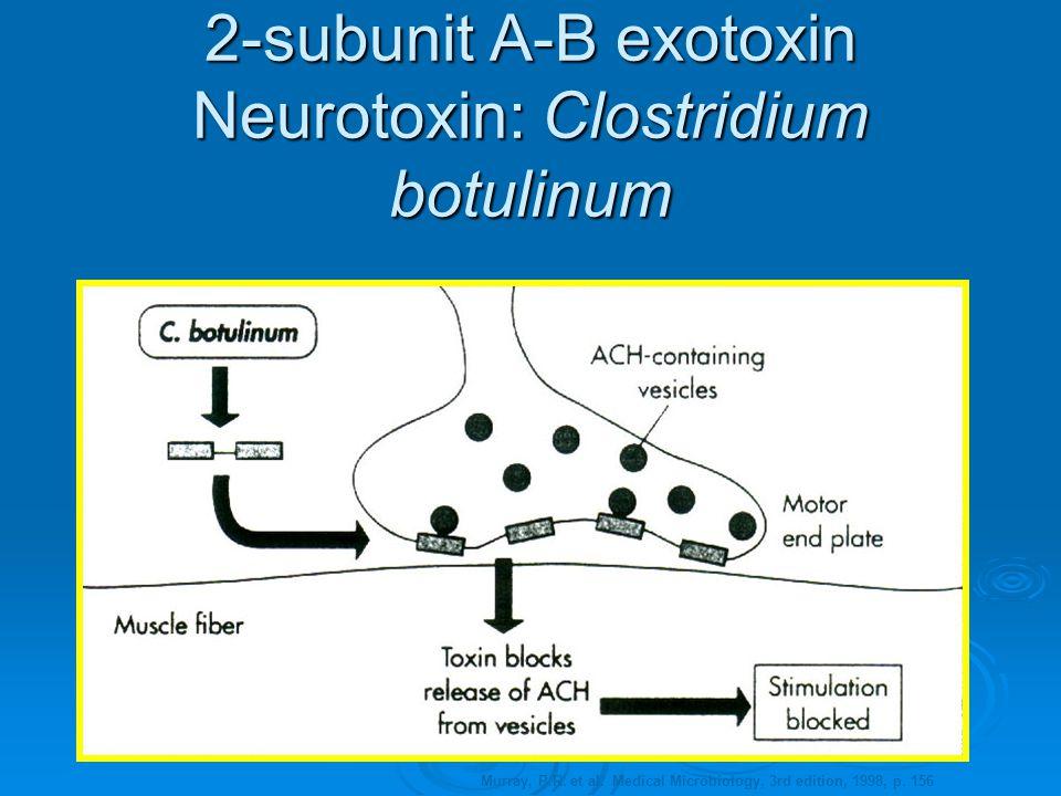 Botulism Exotoxin Blocking Acetylcholine Release  The botulism exotoxin binds to the presynaptic neuron and blocks its release of acetylcholine.