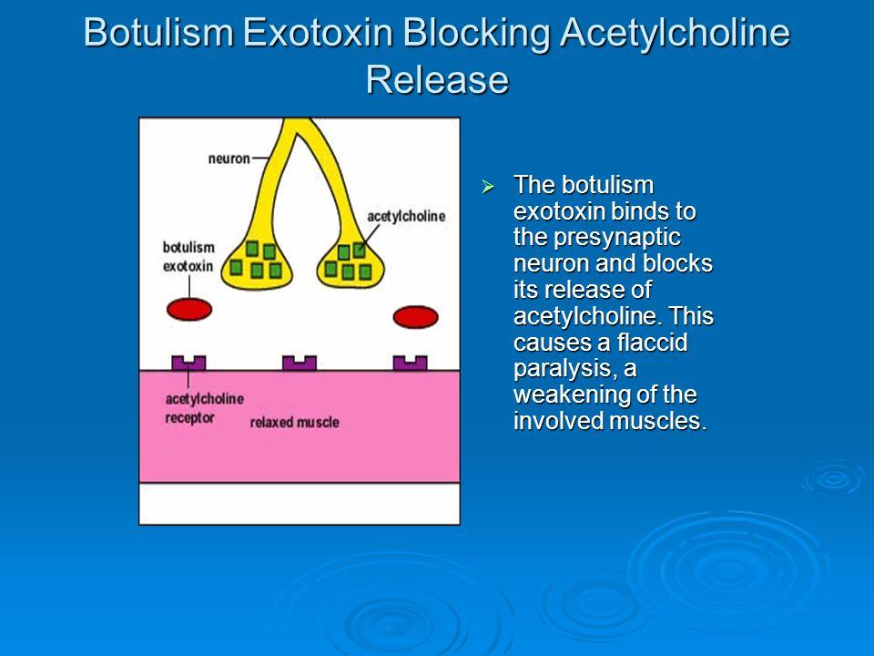 ProteasesProteases PhospholipasesPhospholipases Detergent-like actionDetergent-like action Membrane damaging exotoxins