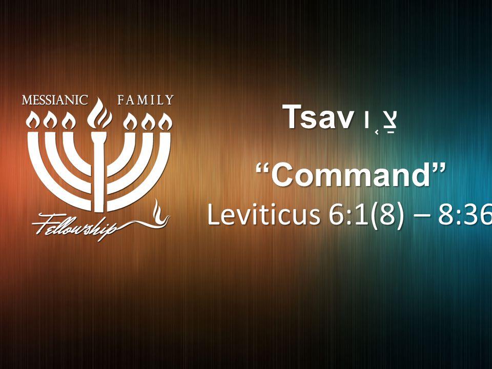 Tsav Tsav צַ ֤ ו Command Leviticus 6:1(8) – 8:36