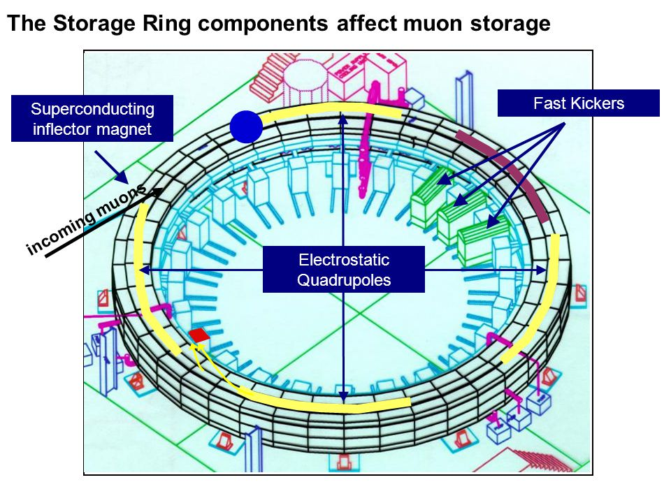 The Storage Ring components affect muon storage incoming muons Superconducting inflector magnet Fast Kickers Electrostatic Quadrupoles